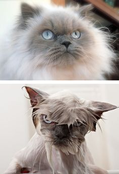 15+ Hilarious Animals Before And After A Bath | Bored Panda