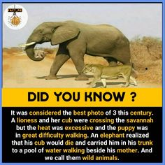 Double TAP for more amazing facts&knowledge . - TAG a friend to show this -TURN. True Interesting Facts, Some Amazing Facts, Interesting Facts About World, Intresting Facts, Unbelievable Facts, Interesting Facts About Elephants, Amazing Science Facts, Awesome Facts, Wierd Facts