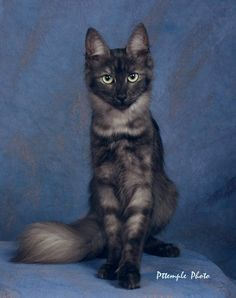 NightClan Cats - A New Era..dream cat..saw a kitten one time but , could not get him :(