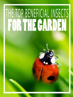 The Top 10 Beneficial Insects for the Garden - HomesteadingandHealth