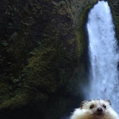 biddy-hedgehog_16.jpg