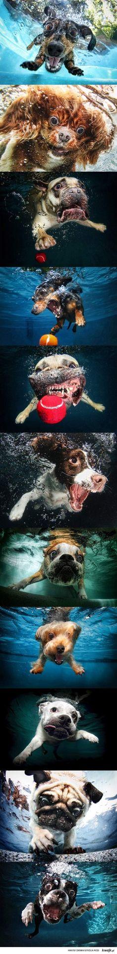Nurkujące psy