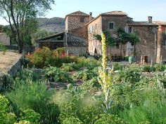 Peille   SCAPE DESIGN - this garden was created entirely from seed
