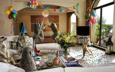 (funny animals) 745 funny party animals humor_wallpaperl