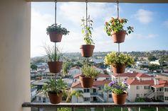 vertical garden on balcony