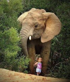 Small child with the elephant Animals For Kids, Animals And Pets, Baby Animals, Cute Animals, Elephants Never Forget, Save The Elephants, Asian Elephant, Elephant Love, Beautiful Creatures