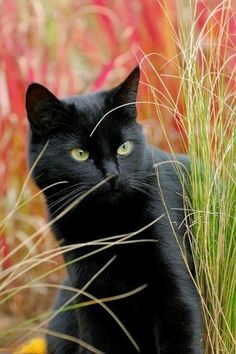 ##cats