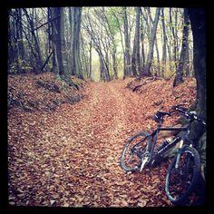 Dieter's Radtouren: 2.11.13 - Zweimal übers Leithagebirge Mountain Biking, Mtb, Bicycle, Country Roads, Sport, Blog, Bike Trails, Mountain Range, Bike Rides