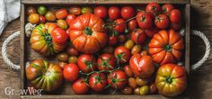There are many great ways to put by tomatoes