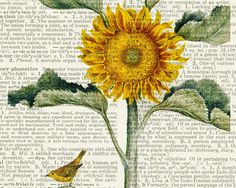 sunflower print vintage artwork printed on page from by FauxKiss