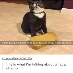 Funny Cat Pics with Captions - 60 the fanniest and the most hilarious pictures! Look other funny and hilarious gifs, videos & pictures of cute cats on site! Funny Animal Memes, Cute Funny Animals, Funny Animal Pictures, Cat Memes, Funny Cute, Cute Cats, Funny Memes, Hilarious Pictures, Animal Quotes