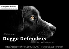 Welcome to Doggo Defenders the best website where you can find lots of information about taking care of your pet's health. Know more information about this can Dogs eat bananas? only on Doggo Defenders. Can Dogs Eat Bananas, Kong Treats, Banana Treats, Dog Eating, Defenders, Pet Health, Healthy Treats, Small Dogs, Canning