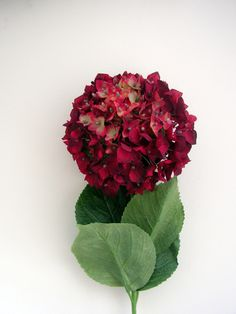 http://www.withycombefair.co.uk/images/hydrangea_antique_red.jpg