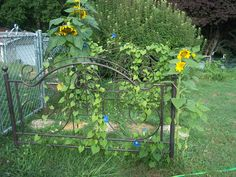 I took my old iron head and foot boards from my bed and made gates with them, I planted some morning glory and sunflowers and put a stone path between them, it looks realy pretty.