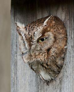 amazing owl photos - Google Search