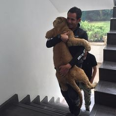 Ayrton might be growing but I'm his dad regardless... Ayrton es un bebito... #babyayrtonbjwt #saveLions #saveourplanet #behuman #notpets #nosonmascotas #blackjaguarwhitetiger #rescuedLions #ayrtonsenna #brasil #brazil