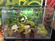 snake vivarium jungle skulls