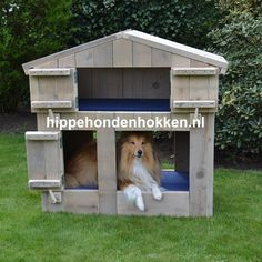 #hondenhok #steigerhout Stoer hondenhok met de naam Boris Dog Houses, Shed, Outdoor Structures, Pets, Outdoor Decor, Home Decor, Decoration Home, Room Decor, Dog Kennels