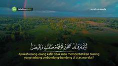 Surah Al Mulk Qari Abdul Rahman al Ossi full video see on youtube @tadabbur_ #tadabburdaily  Follow  @dakwahbro @dakwahbro @dakwahbro Share Post ini.  InsyaAllah Amal Jariyah bagi kita semua.   #dakwahbro #dakwah #ramadhan #ramadhan1439h