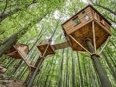 fabriquer une cabane dans les arbres et une maison en bois