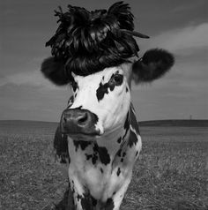 What's up! trouvaillesdujour: OH LA VACHE! Meet Hermione, the Very Stylish Cow
