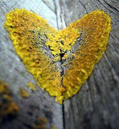 Lichen Heart: I'm lichen this! ;)  Alice Algae & Fred Fungas took a Lichen to each other...