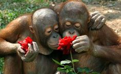 Çiçek koklayan hayvanların en sevimli halleri...