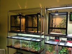 Our reptile room