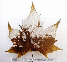 ♥ Скелетирование листьев.