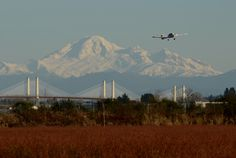 Mount Baker and Golden Ears Bridge by Ian Threlkeld Pictures Of Bridges, America, Mountains, Nature, Ears, Travel, Tattoos, Naturaleza, Viajes