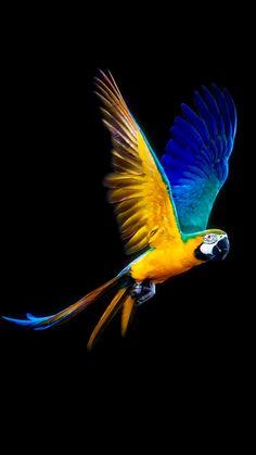 Parrot in flight. Pretty Birds, Beautiful Birds, Animals Beautiful, Parrot Wallpaper, Animal Wallpaper, Colorful Animals, Colorful Birds, Parrot Flying, Tier Fotos