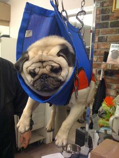 Dog hates getting its nails clipped? Have them hung this sling.