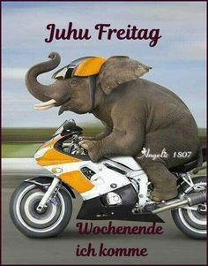 juhu freitag bilder #Freitag #juhufreitagbilder Weekend Gif, Asian Elephant, Kingdom Of Heaven, Love And Light, My Father, Mammals, Animals And Pets, Good Morning, Lol