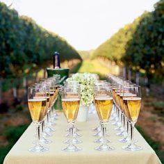 *gasp* a vineyard wedding!!