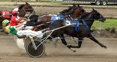 harness racing | Harness Racing at the Illinois state fairs