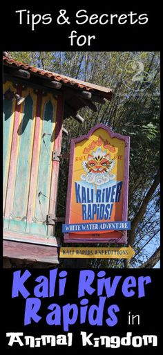 Everything you need to know about Kali River Rapids. Pin now and reference on your next Disney trip.