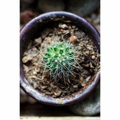 Cactus Close Up. #agave #background #botany #cactus #closeup