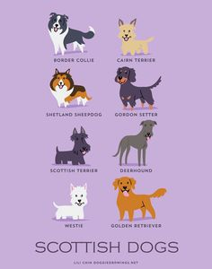 From SCOTLAND: Border Collie, Cairn Terrier, Shetland Sheepdog, Gordon Setter, Scottish Terrier, Deerhound, West Highland Terrier, Golden Retriever.