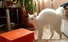 Startled cats forgetting how to walk