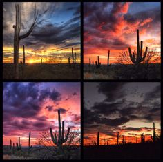 Sky Collage | Tucson | Arizona | Via Instagram by @allophile_ |  https://www.visittucson.org/