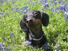 Things we love: this pup, puppies smiling, spring time, and #bionic toys www.bionicplay.com