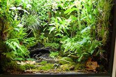 Luc Somers chamelon palu. Lush! Love the fern/creeper growth.