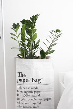 the paper bag Plantas Indoor, The Paper Bag, Plants Are Friends, Flowering Trees, Botany, Indoor Plants, Tricks, House Plants, Mother Nature