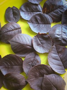 Looks like the best tutorial on this to me - How to make Chocolate Leaves