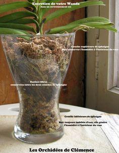 les fleurs d int rieur les orchid es en 40 images plantes jardinage et fleurs. Black Bedroom Furniture Sets. Home Design Ideas
