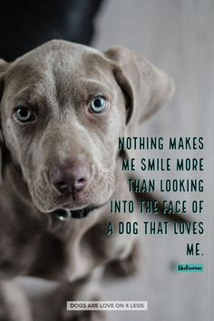 Dog Dog Quotes Inspirational Quotes Fun - Funny Dog Quotes - The post Nothing Makes Me Smile More than. Dog Dog Quotes Inspirational Quotes Fun appeared first on Gag Dad. Dog Quotes Funny, Funny Dogs, Funny Animals, Cute Animals, Animal Fun, Pet Quotes, Fun Funny, Dog Sayings, Weimaraner