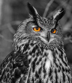 Eurasian Eagle Owl by Trevor Chapman on 500px