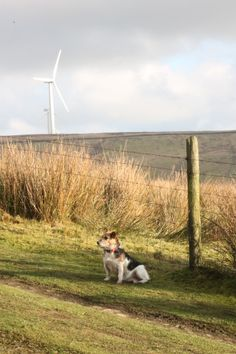 Pennine Way, Ashworth, Lancs, Jan 2014