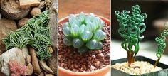 Ha egy kis változatosságra vágysz otthonod palántái között, akkor az alábbi listában biztos találsz magadnak néhány új, különleges kedvencet! Szobanövények.