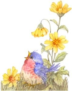 paint this cute bird on a chair Funny Birds, Cute Birds, Watercolor Bird, Watercolor Paintings, China Painting, Bird Pictures, Bird Prints, Bird Art, Beautiful Birds